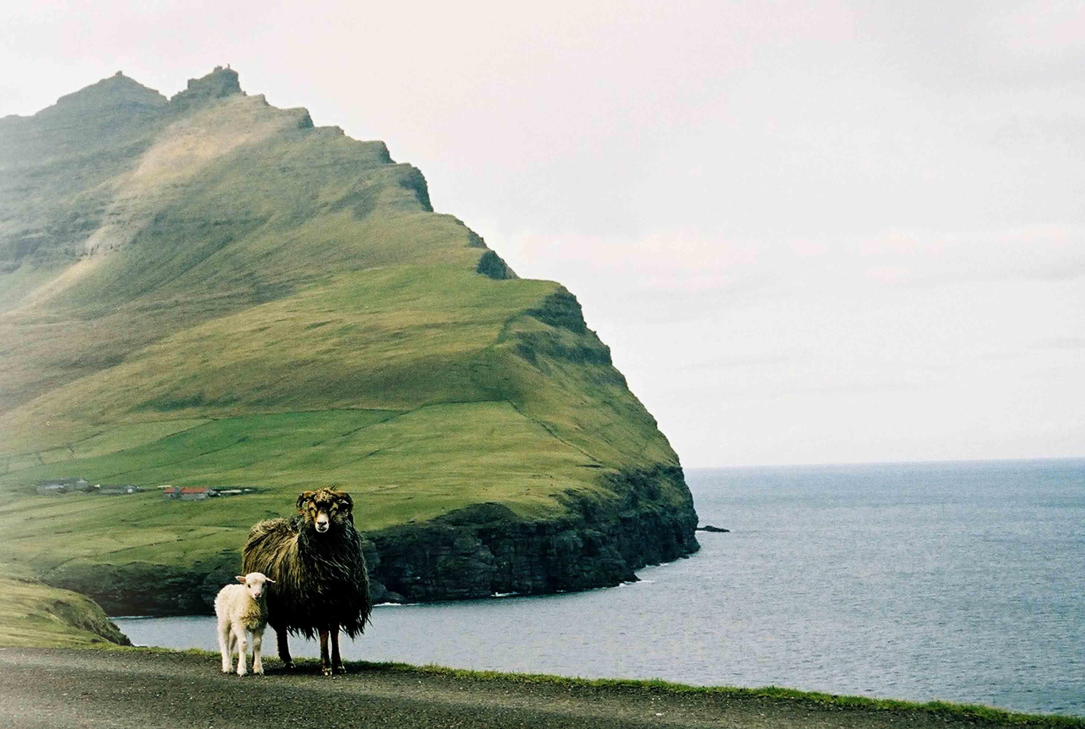 Færøyene - et mikrosamfunn i Nordens utkant